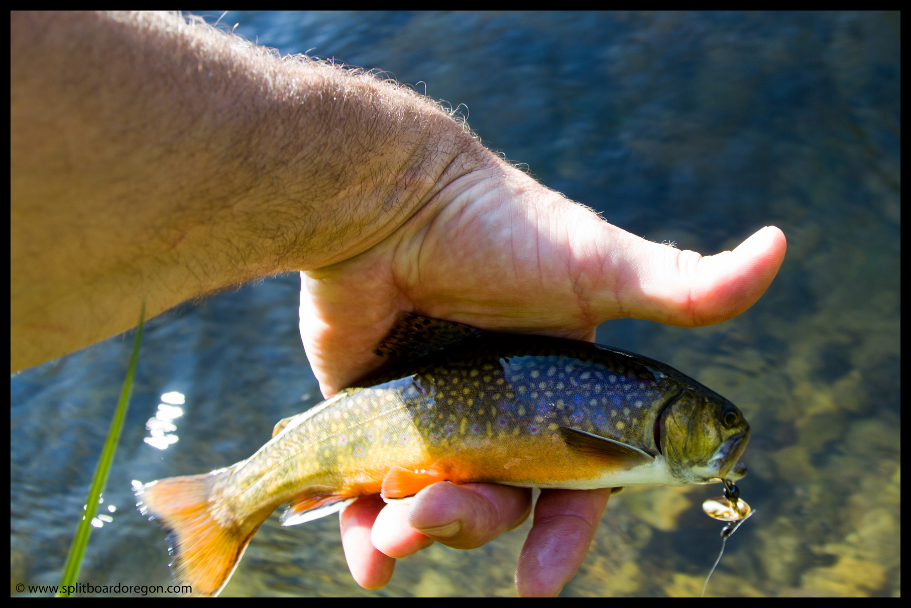 Upper Deschutes Brook Trout