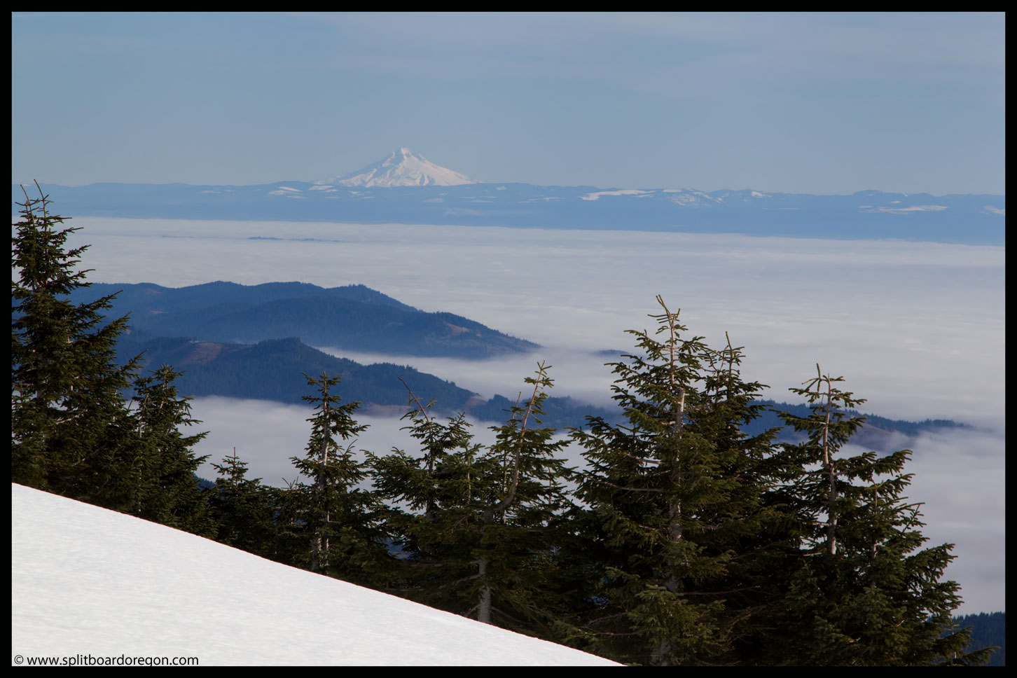 Mt Hood from Mary's Peak