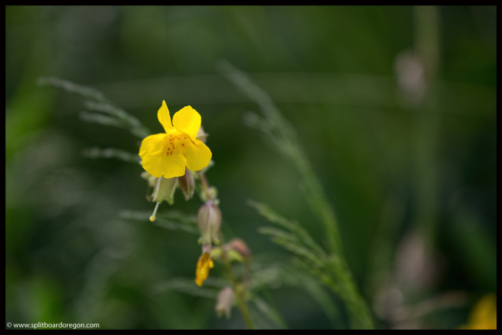 Isolated flower along the bank